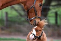 cute animals every where! / i love cats and horses