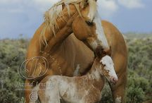 wild mustangs horses