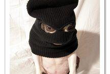 Dog hat