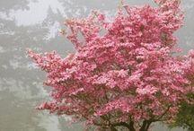 Saboreio a Primavera