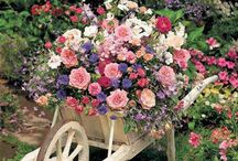 Floral Arrangements / Beautiful flowers brighten up any occasion