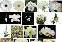 flores composiciones y ramos / arreglos florales y plantas
