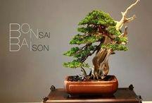 Bonsai-Δένδρα.