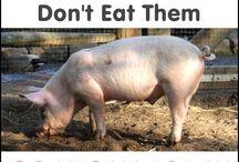 Love animals, don't eat them / by Vegan Future
