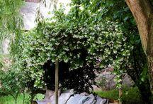 Garten / Longe