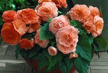 Virágok, zöldsègek
