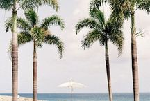 | tropical |