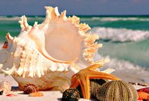 Seashells / by Anita Forbish