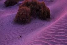 The Desert is Mine / by Tova Dian Dean