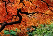 Autumn painted by God