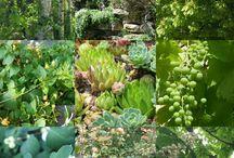 Couleur : Vert / Décoration,  jardin,  objets