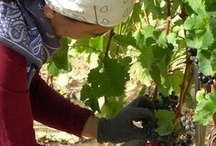 Vini Cormòns