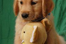 Teddy / I need my teddy bear