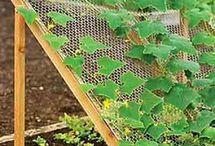 garden tip top tips