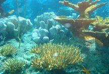 Oceanfloor Reference