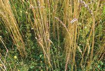 Alus- ja kerääjäkasvit / Aluskasveja viljelemällä voidaan vähentää typen huuhtoutumisriskiä, suojata maata eroosiolta ja hyödyntää biologista typensidontaa. Aluskasvit kilpailevat myös elintilasta rikkakasvien kanssa, vähentävät tuholaispainetta ja voivat estää joidenkin tautien leviämistä. Juuret lisäävät merkittävästi maanalaista kasvimassaa lisäten maan eloperäisen aineksen määrää.