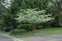 Cole Garden