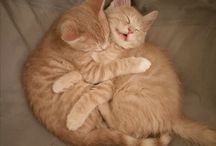 Cats / The two fur balls that make this world a better place