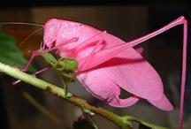 Especies en peligro de extinción: Insectos
