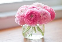 Love pretty flowers and gardening stuff / by Cindy Sorrells