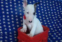 puppy luv / by Anita Richards