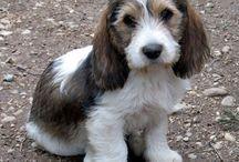 Puppy Love / by Amanda Weiland