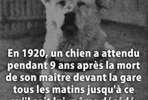 Amour d animaux
