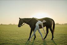 Balett horse