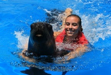 Sea Lions / Three South American sea lions who were saved from a culling now live at Coral World.