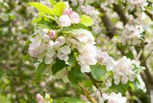 Beautiful spring blooms / Celebrate spring with glorious, frothy flowers