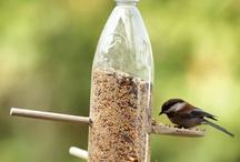 idee pour oiseaux