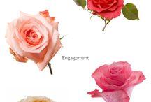 Flowerlink - Color Varieties / Color varieties of our fair trade certified roses, garden roses and hydrangeas.