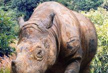 Animals:  Large Mammals