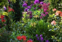 How Does Your Garden Grow. / Colourful Features. / by mike prescott
