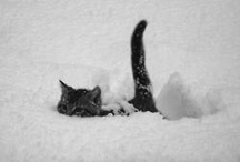 Cute Animals / by Cheryl Yoder