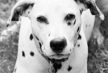 Puppy / Animal Photography