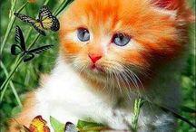Gatos Lindos / Raça