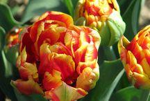 Spring by Landhaus / Spring by Landhaus