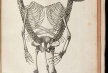 anatomy vintage