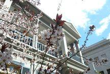 cherry blossoms / Seigo Miyake