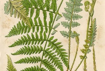 Fern Affection
