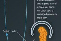 śmierć komórki