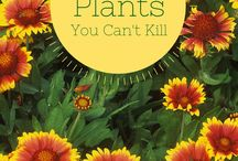 Planten you can't kill