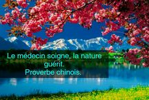 proverbes