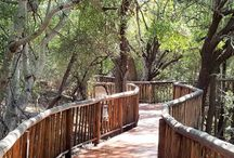 Jaci's Tree Lodge / Jaci's Tree Lodge, luxury in the African bushveld is located in the Northern region of South Africa's Madikwe Game Reserve.
