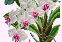 orchidee hafty Cross-Stitch
