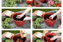 Gardens / gardening, flowers, indoor and outdoor gardens