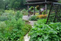 Wild herb farming