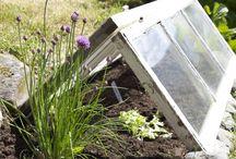 Gardening / Food