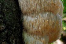 Fungus/Moss
